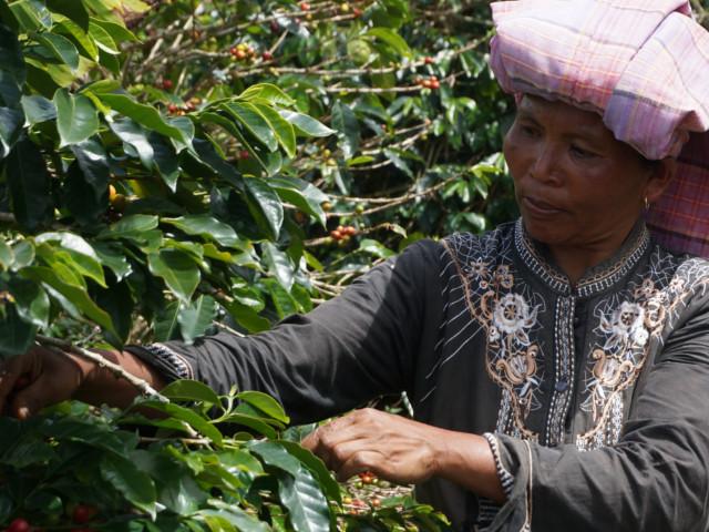 インドネシアコーヒー農家2
